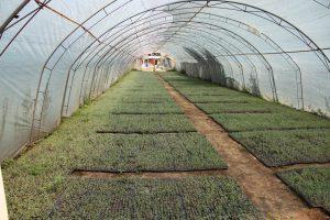 Croatia Farm